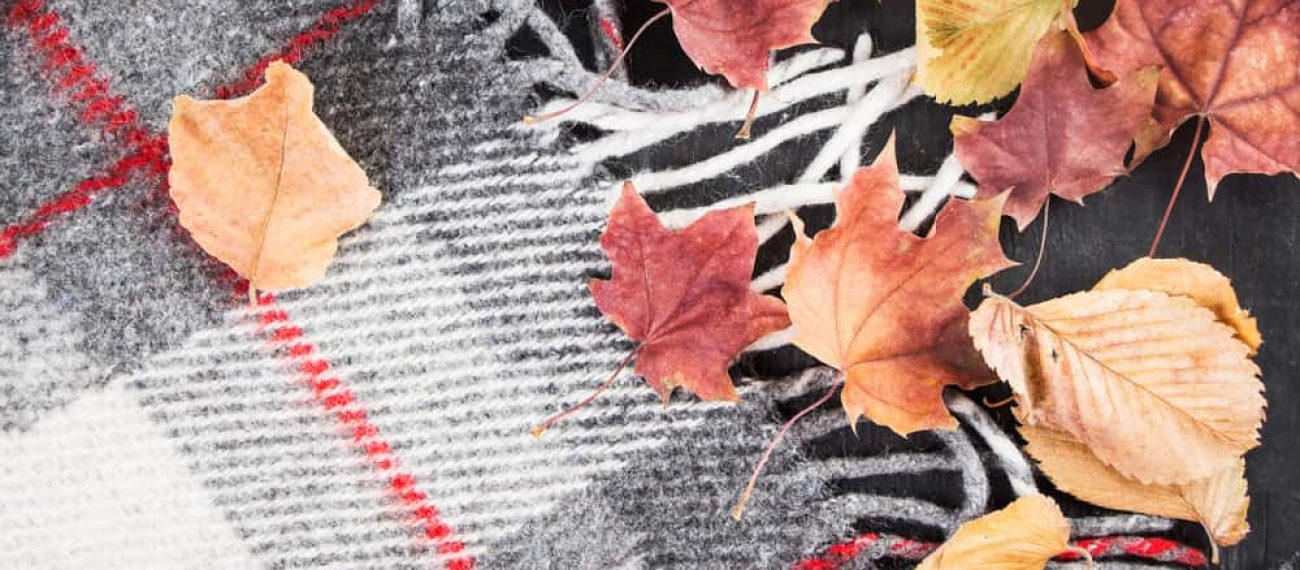 Autumn,Dry,Yellow,Leaves,On,A,Background,Of,A,Warm